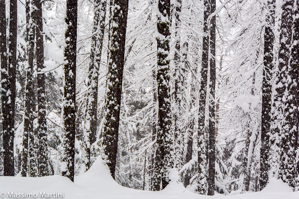 Le bois pendant qu'il neige