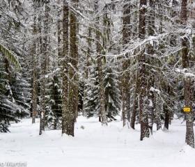 Il bosco incantato