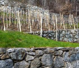 Terrazzamenti in Provincia di Sondrio