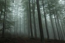 Parco Foresta Bavarese