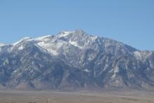 Mont Williamson